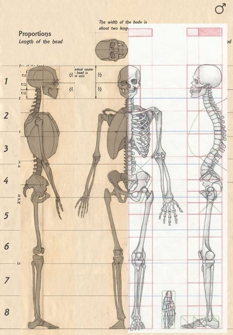 Skeletal Study Cranial Box Strenum Length Unit Measure Figuredrawing Figure Drawing Artguide A Human Anatomy Drawing Anatomy Sculpture Anatomy Sketches
