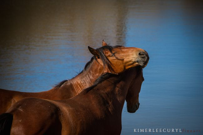 Nevada Wild Horse Management Agreement Approved By Board of - management agreement