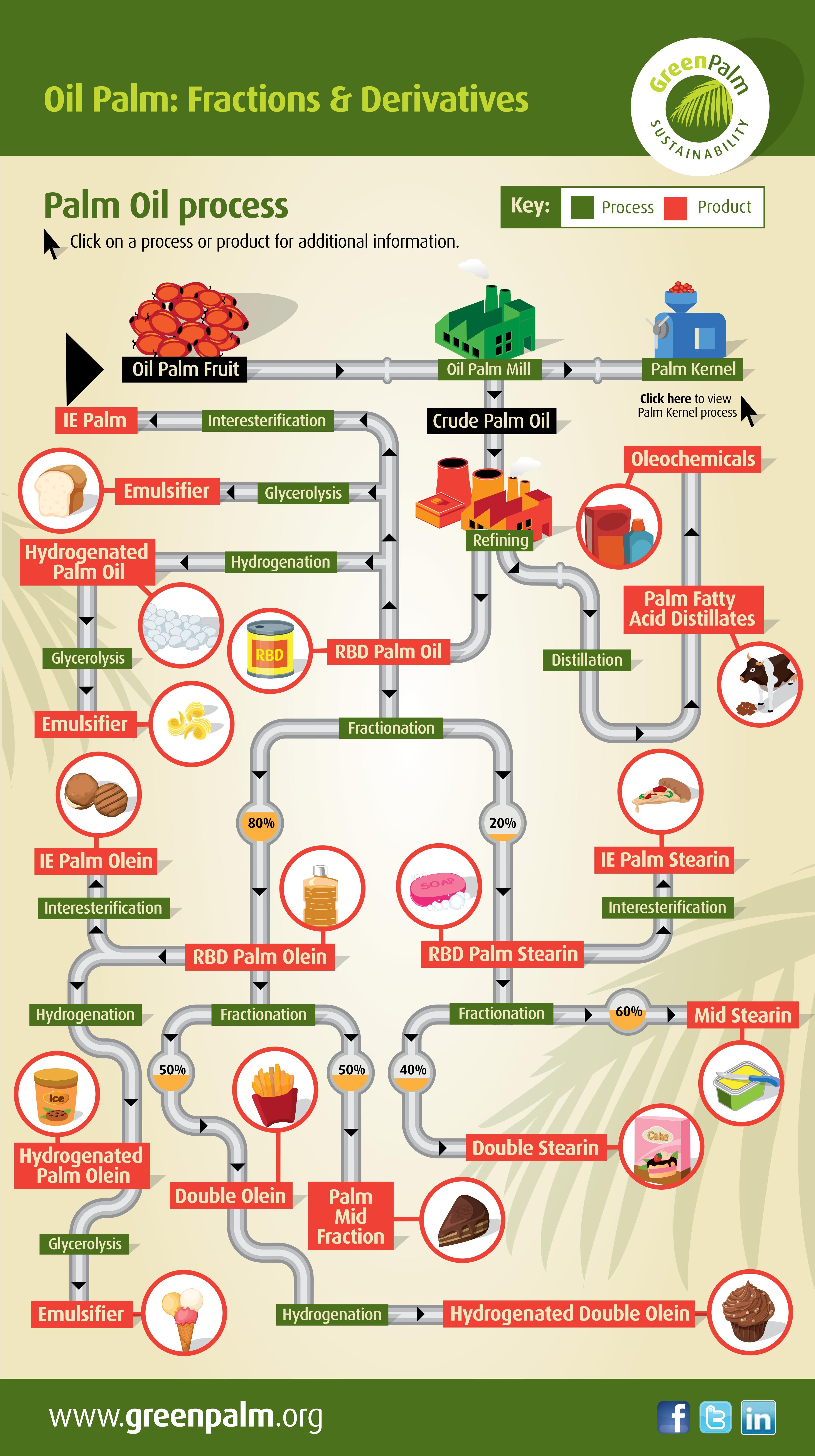 Palm Oil Derivatives Palm Oil Palm Oil Infographic Palm Fruit Oil
