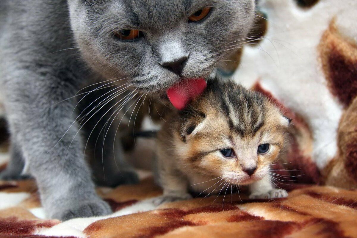 8 Reasons Mother Cats Eat Their Babies In 2020 Cute Animals Animals Cats And Kittens