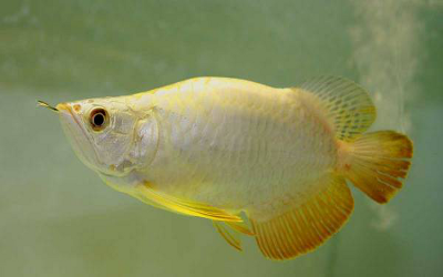 A top notch and reliable aquarium fish supplier is one phone