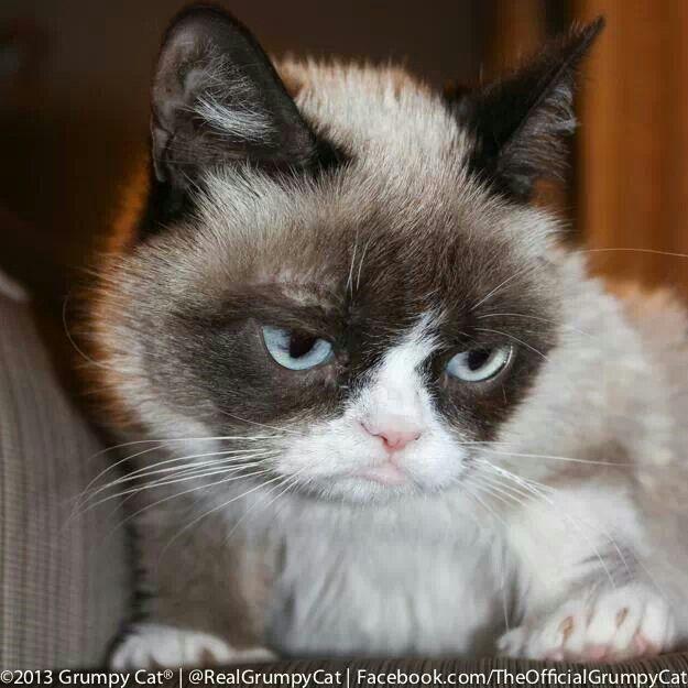 Grumpy Cat, Grumpy Cat Meme, Cat Memes