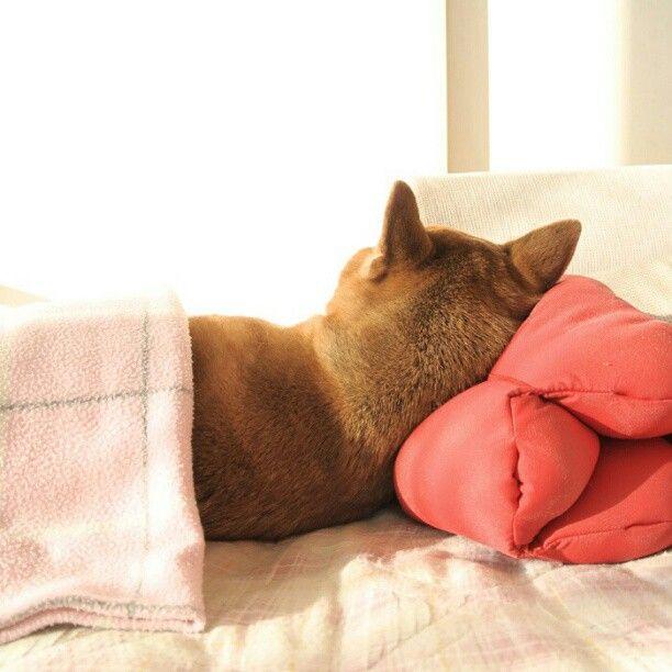 おやすみなさい。good night