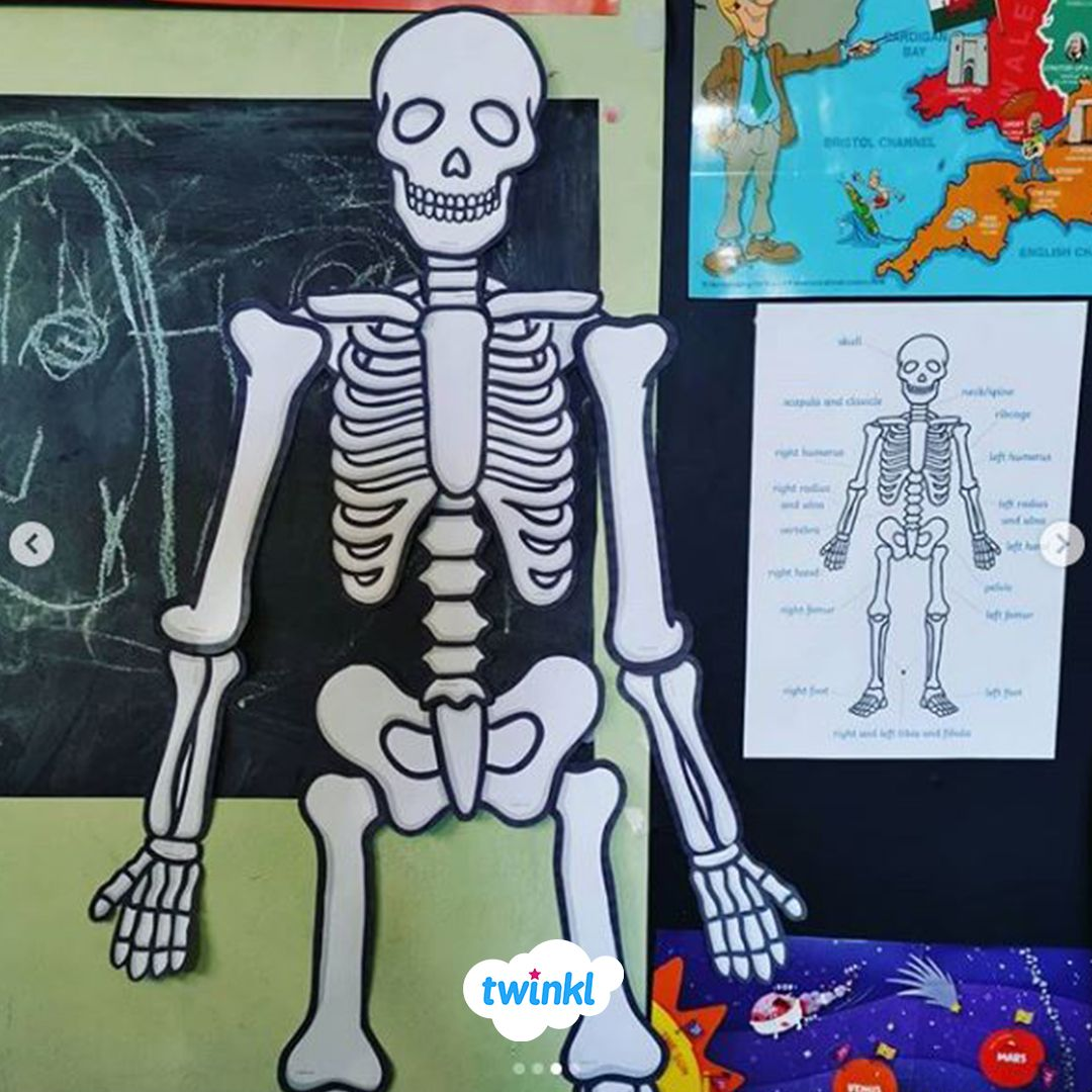Teach Your Children About The Different Parts Of The Human Skeleton And How They Fit Together