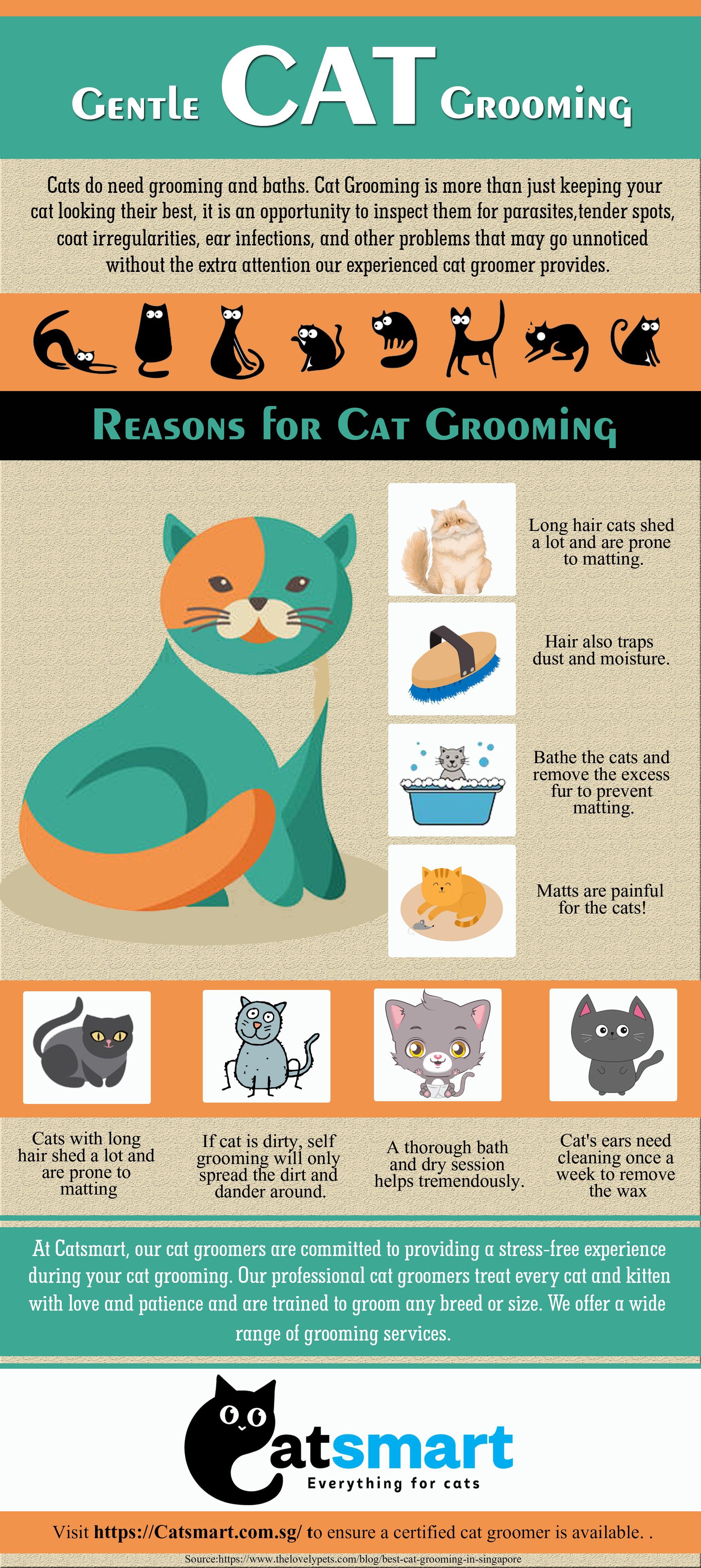 Gentle Cat Grooming In 2020 Cat Grooming Cat Groomer Grooming