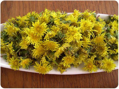 Pin By Heather Parlato On Recipes Dandelion Recipes Liqueurs Recipes Wild Food