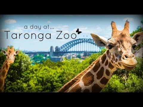 Taronga Zoo Sydney Australia 2017 Youtube Zoo Visit Sydney Sydney Australia