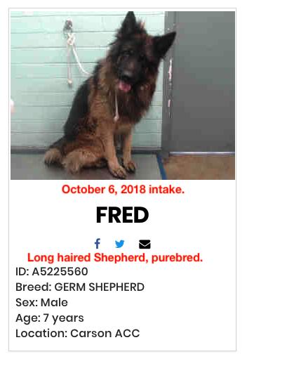 Pin By Suemillion On Please Adopt Pet Adoption Breeds Adoption