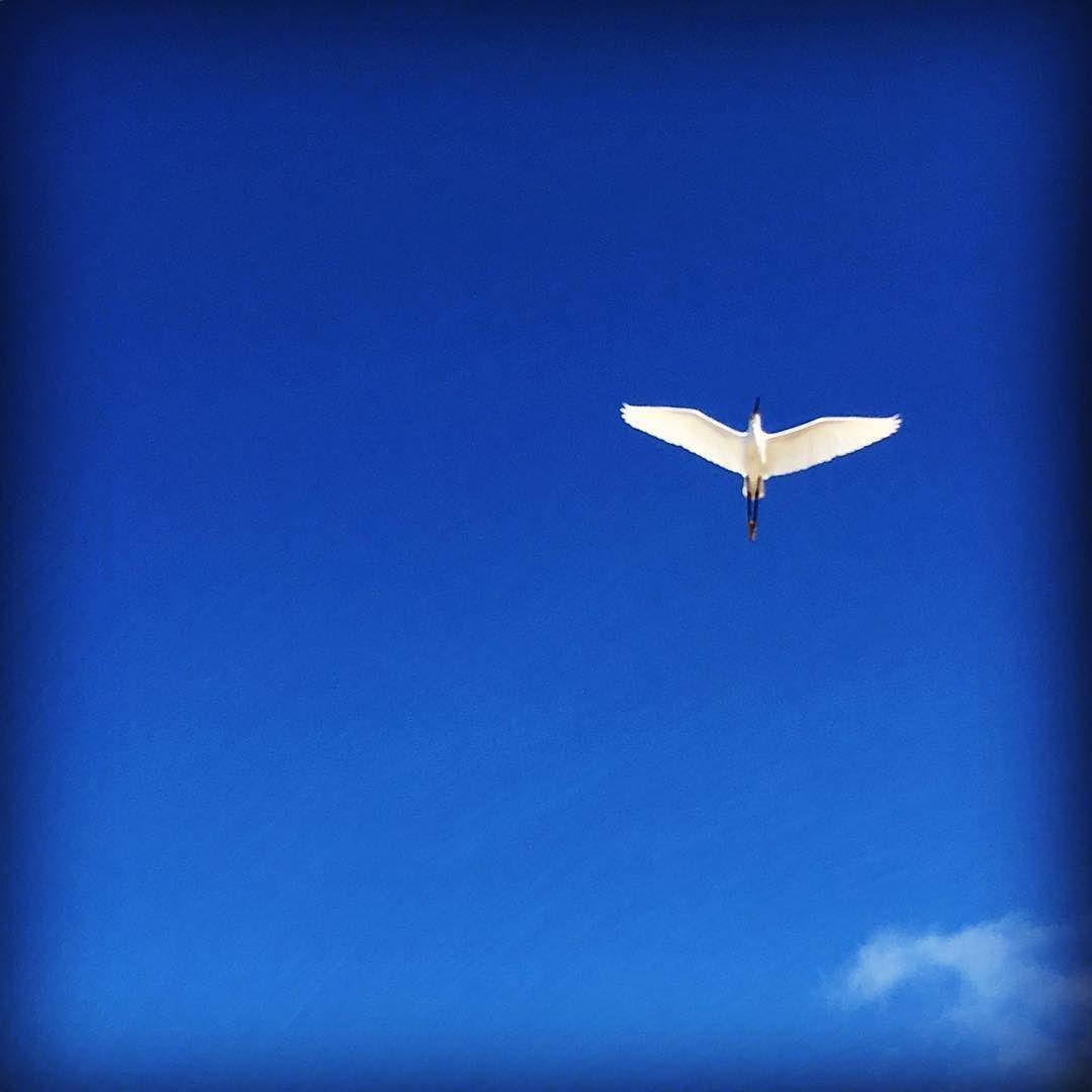 #bird #fly #minimalist #minimal #bluesky #nature #naturelovers