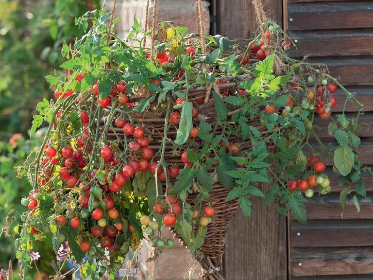 Hängekorb geflochten mit Nach-Tomaten   Garten   Blumenampel ...