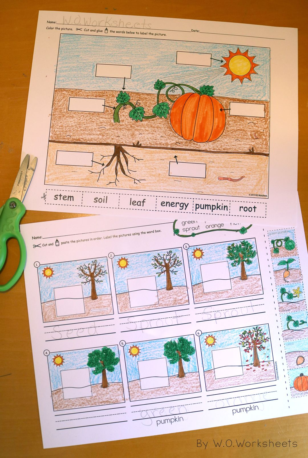 Pumpkin Life Cycle With Images