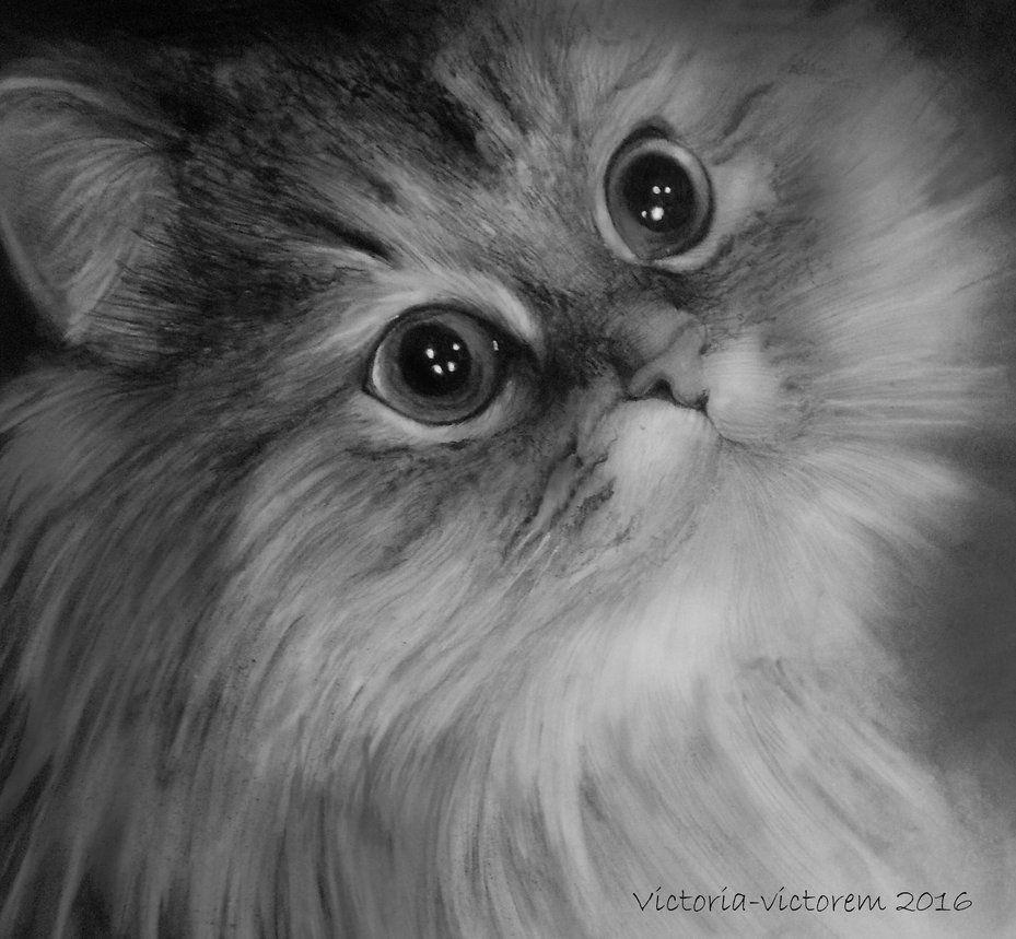Graphit, Bleistift Zeichnung auf 200 Gramm Künstlerpapier getigertes Kätzchen Tiger Kitten original Pencil drawing Format: 18 x 25 cm - 7 x 10 inches