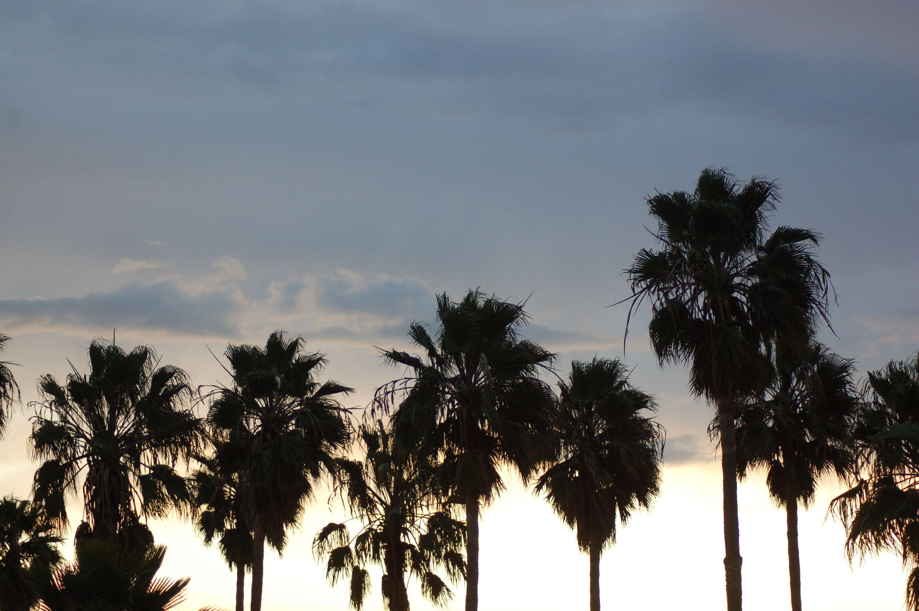 lovely palms. México.
