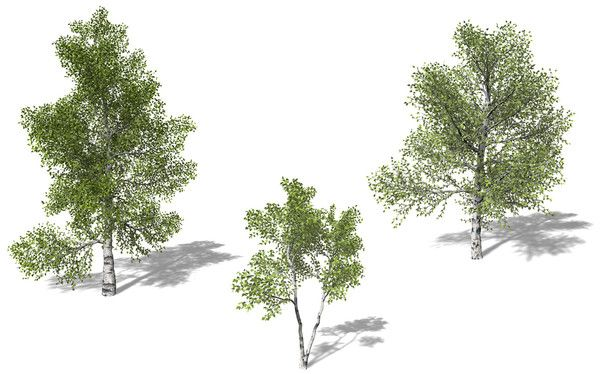 Xfrog For Sketchup 3d model xfrogplants p...