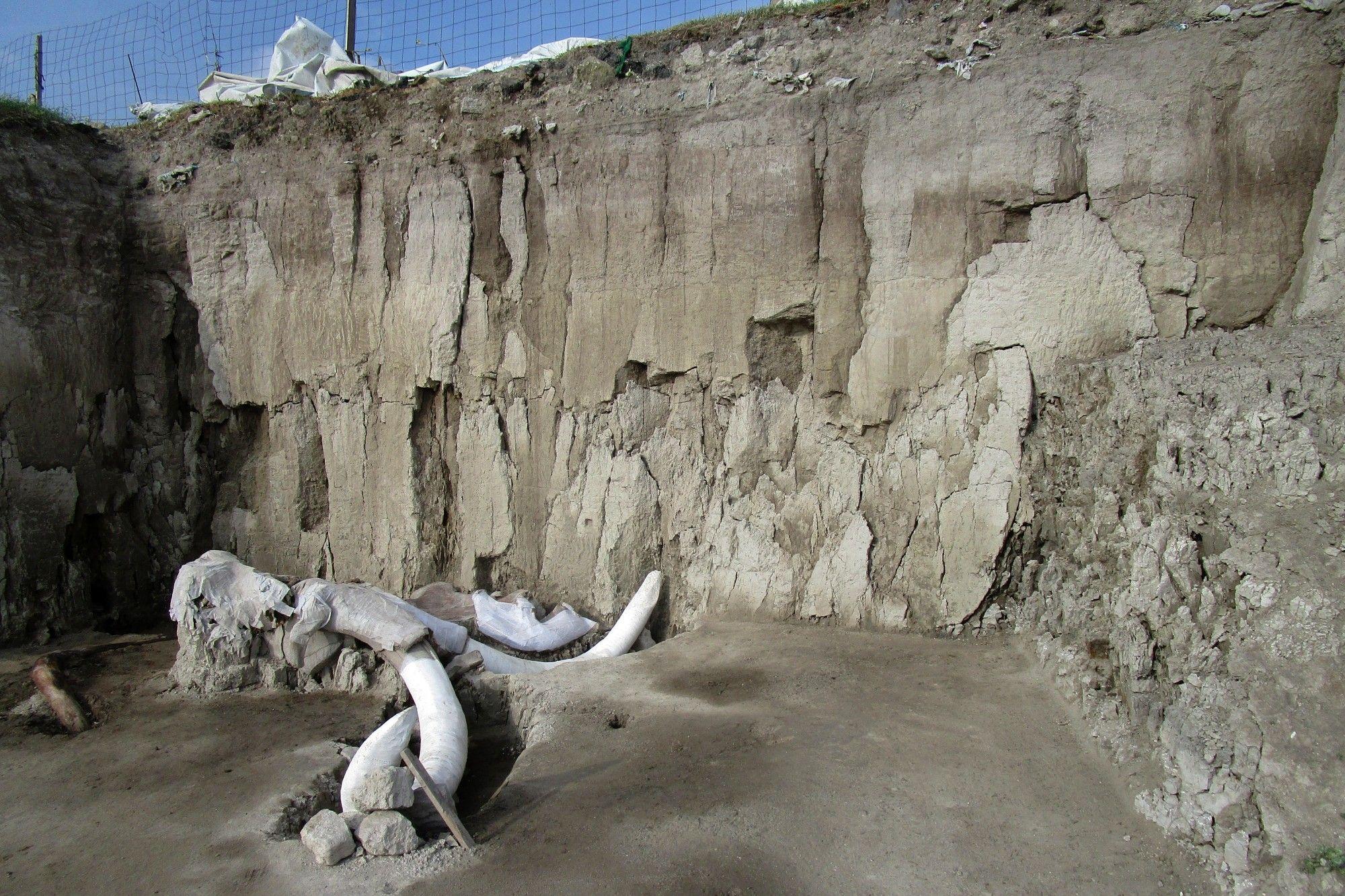 Mexique les ossements d'au moins 14 mammouths découverts