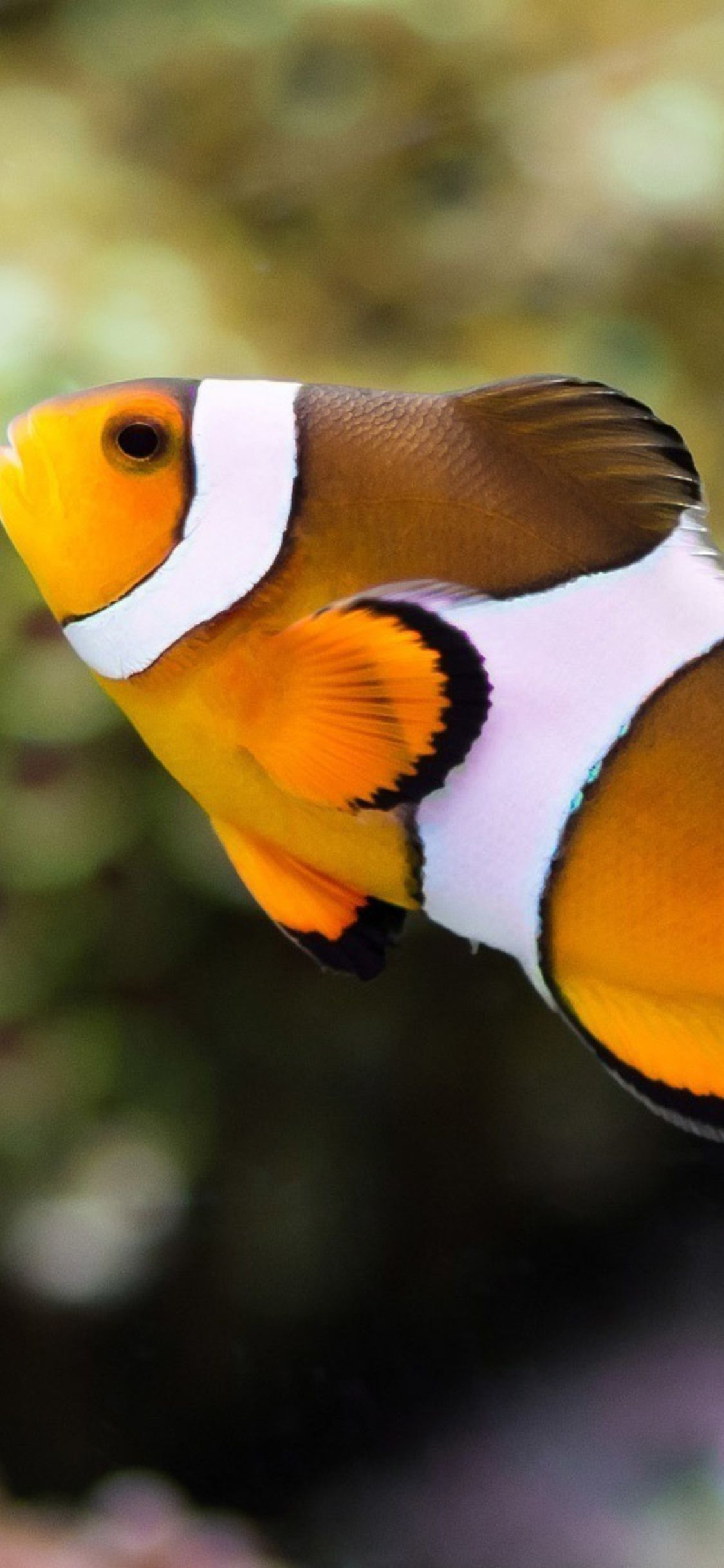 Iphone Clownfish Wallpaper 4k Mywallpapers Site Iphone Animal Wallpaper Iphone Wallpaper