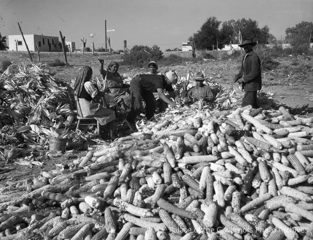 Husking corn, Jemez Pueblo, New Mexico  Photographer: Ferenz Fedor Date: 1940 - 1950?  Negative Number 100295 #husking#shucking#corn#harvest#jemez pueblo#jemez#new mexico#ferenz fedor#1946#native american#indigenous