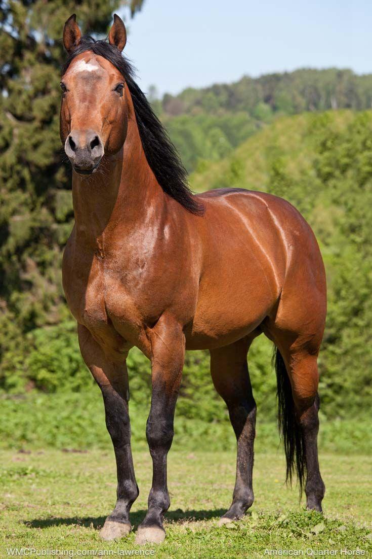 50 best AQHA Stallions images on Pinterest | Equine
