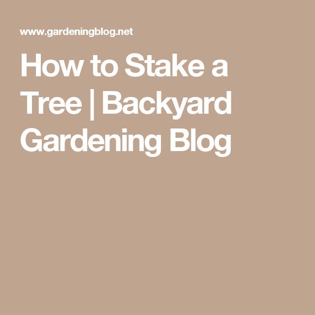 How to Stake a Tree | Backyard Gardening Blog