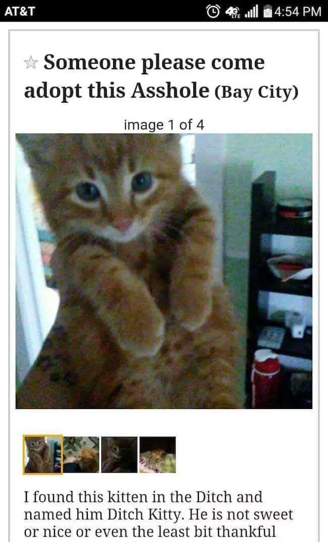 Cuty Cat Kittens Funny Funny Animal Memes Cat Jokes