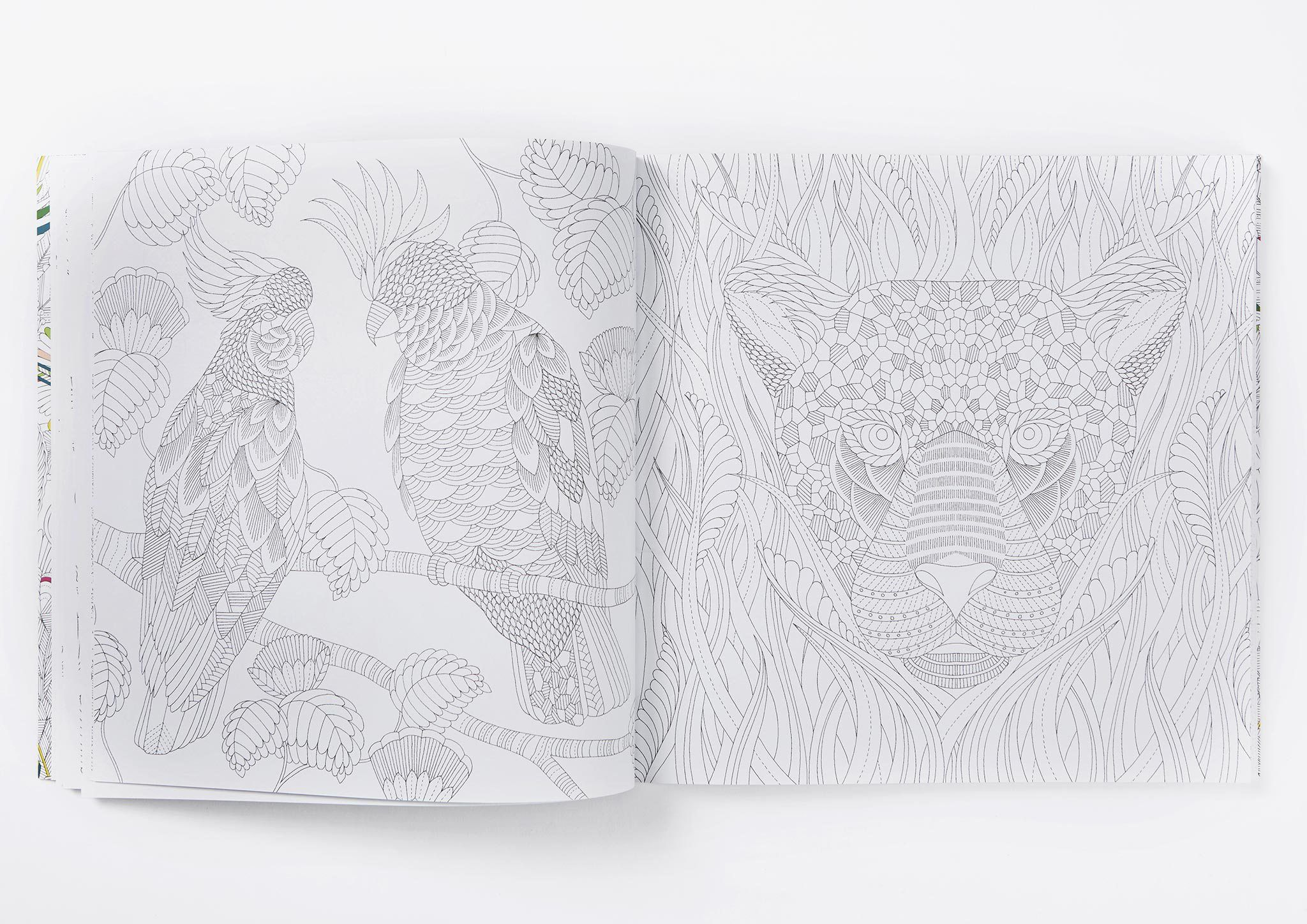 Escape With My Second Colouring Book To Your Very Own Tropical Wonderland Discover Prowling Leopards Flocks Of Parrots Delicate Jellyfish And The