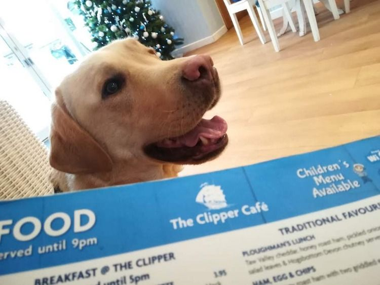 The Clipper Cafe Shaldon Dog Friends Pets First Free Food