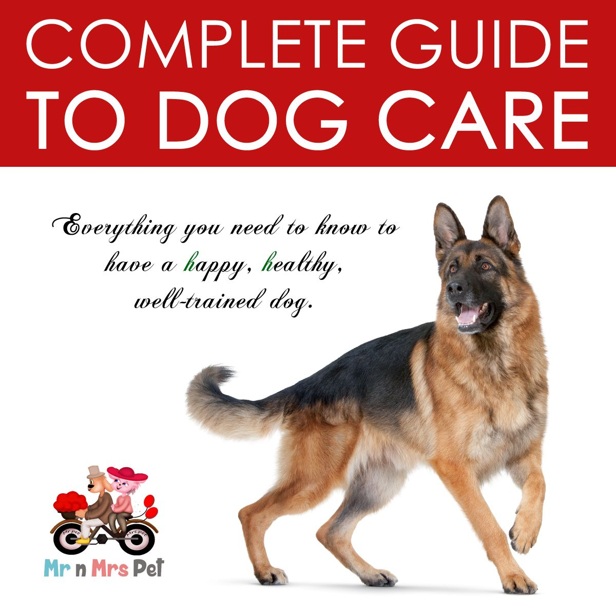 Dog Care Guide Dog Care Pets Dogs
