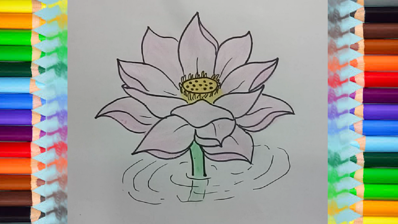 how to draw a lotus flower (With images) Flower drawing