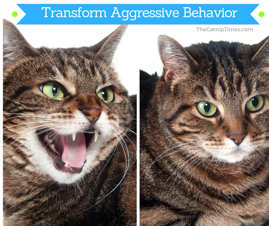 EFFECTIVELY DEALING WITH CAT AGGRESSION Cat behavior