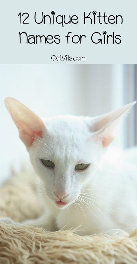 12 Unique Kitten Names For Your Girl Cat Catvills Cat Names
