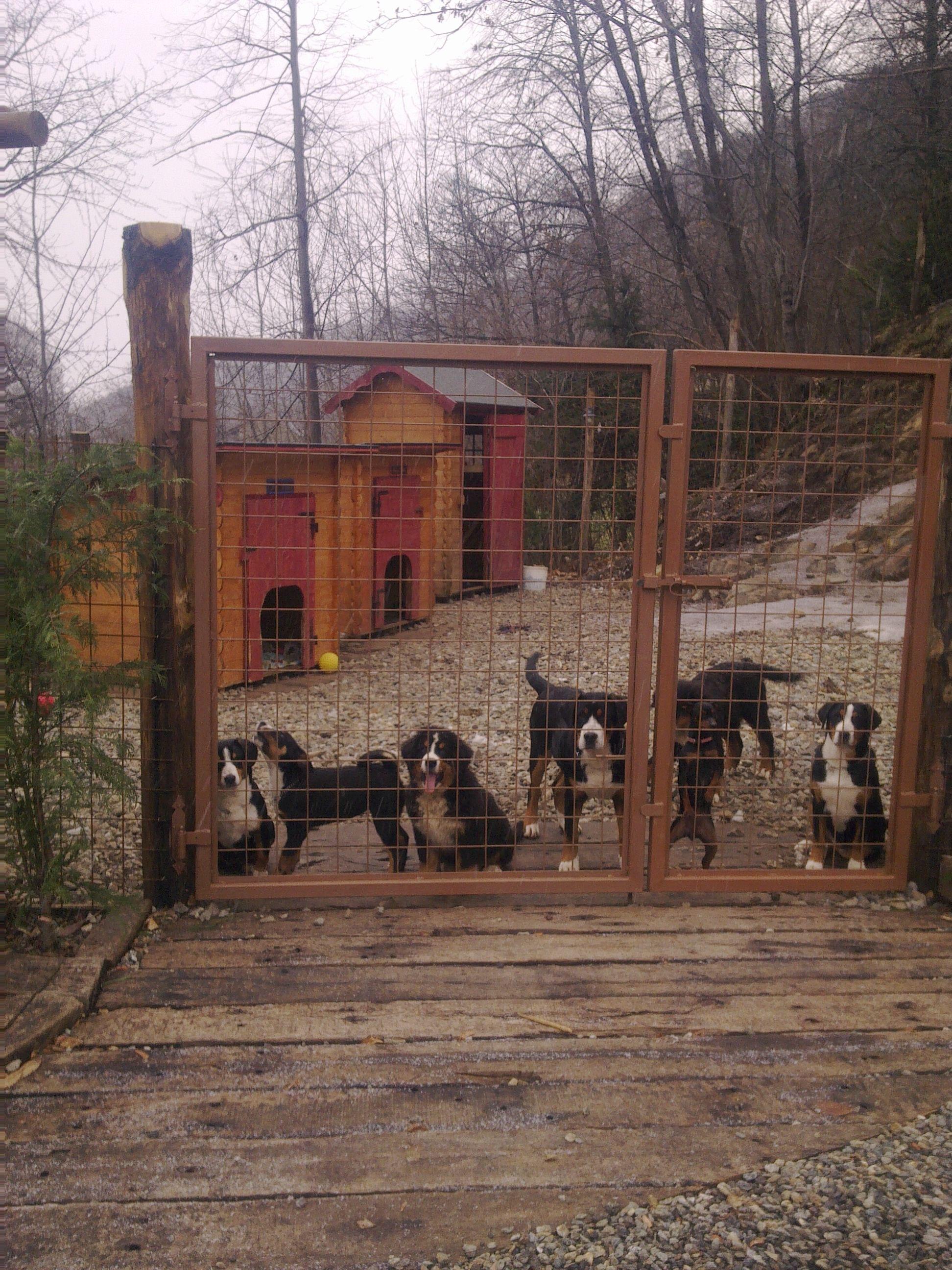 Una mandria di cani