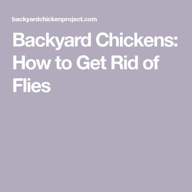 Backyard Chickens: How to Get Rid of Flies   Get rid of ...