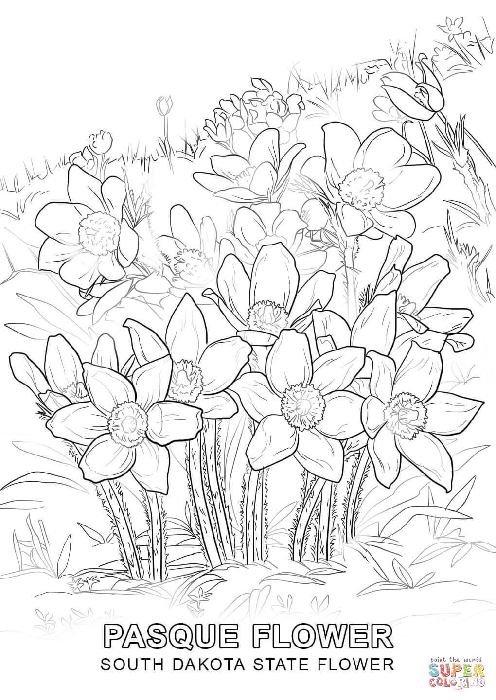 click the south dakota state flower coloring pages to view