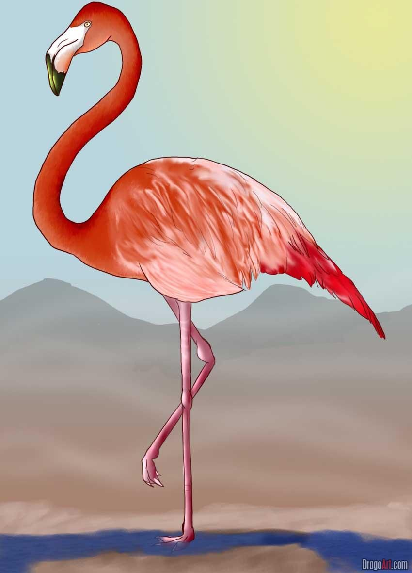говори, фламинго фото рисунков восковая
