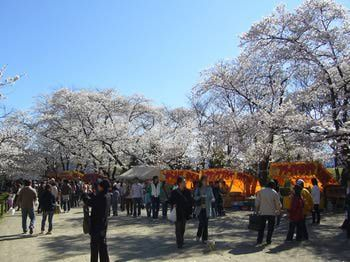 Everything To Know About Japan S Cherry Blossom Festivals Japan Cherry Blossom Festival Cherry Blossom Festival Festival