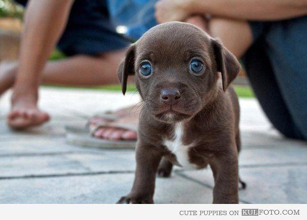 Top Cute Puppy Blue Eye Adorable Dog - 1d8b156f2fb3d45f9c33b69846520894  You Should Have_956419  .jpg