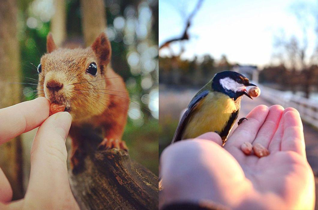 картинки человек кормит животных следует
