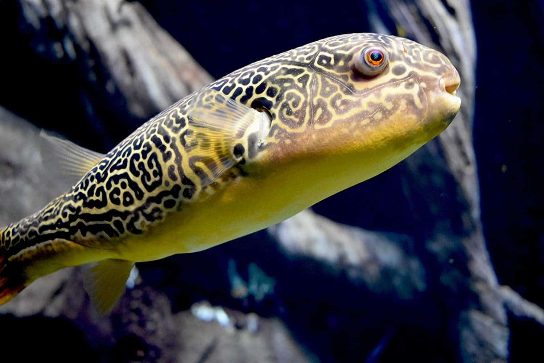 Seachem Clarity Review How To Get Rid Of Cloudy Water In 2020 Saltwater Tank Aquarium Fish Planted Aquarium