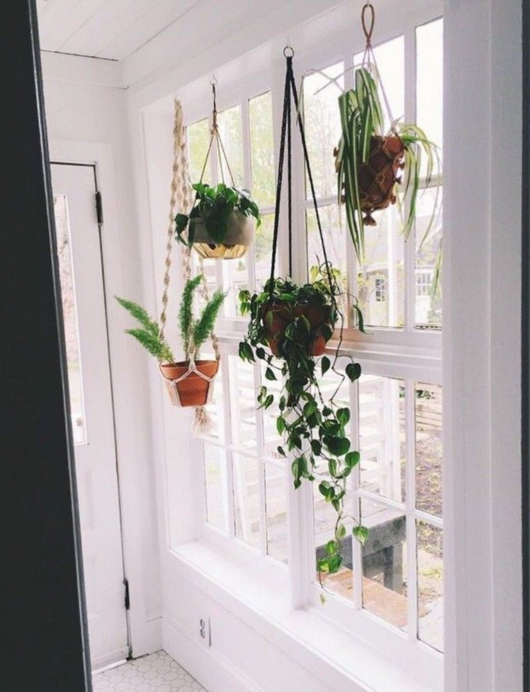10 Beautiful Space Saving Diy Hanging Planters Ideas In 2020 Window Plants Hanging Plants Indoor Hanging Plants