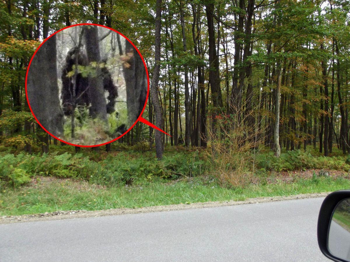 3 Real Bigfoot Sightings