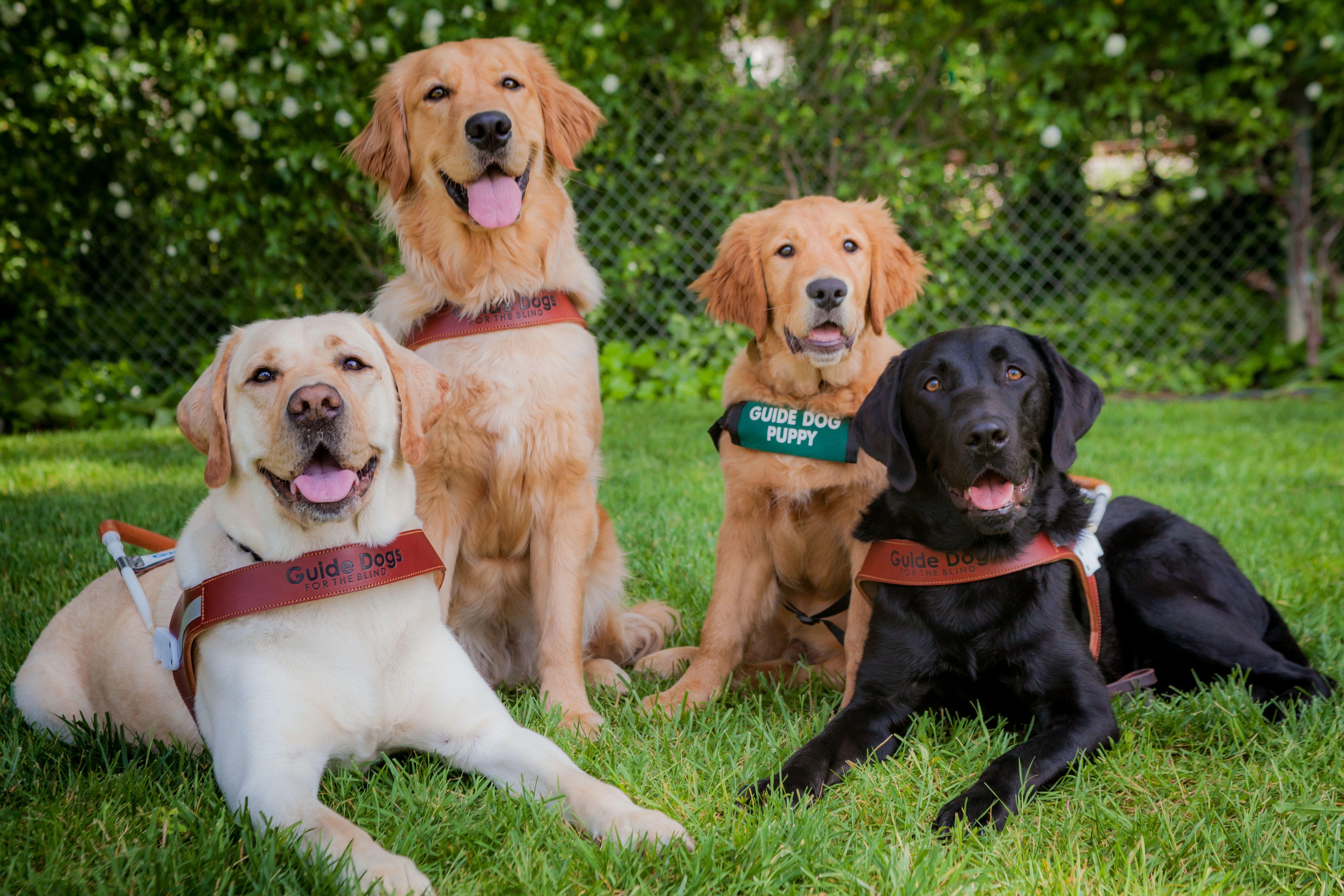 We Re Celebrating National Guide Dog Month Guide Dog Dog School