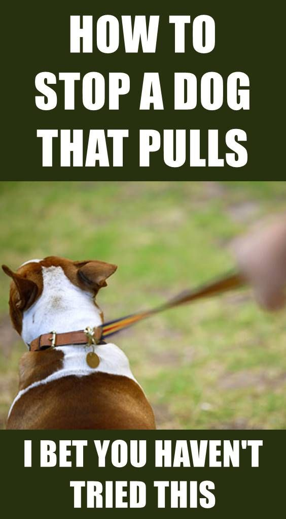 Has walking your dog turned into a constant game of tug o