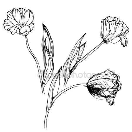 T l charger vecteur main dessin fleur de tulipe noir et - Tulipe a dessiner ...