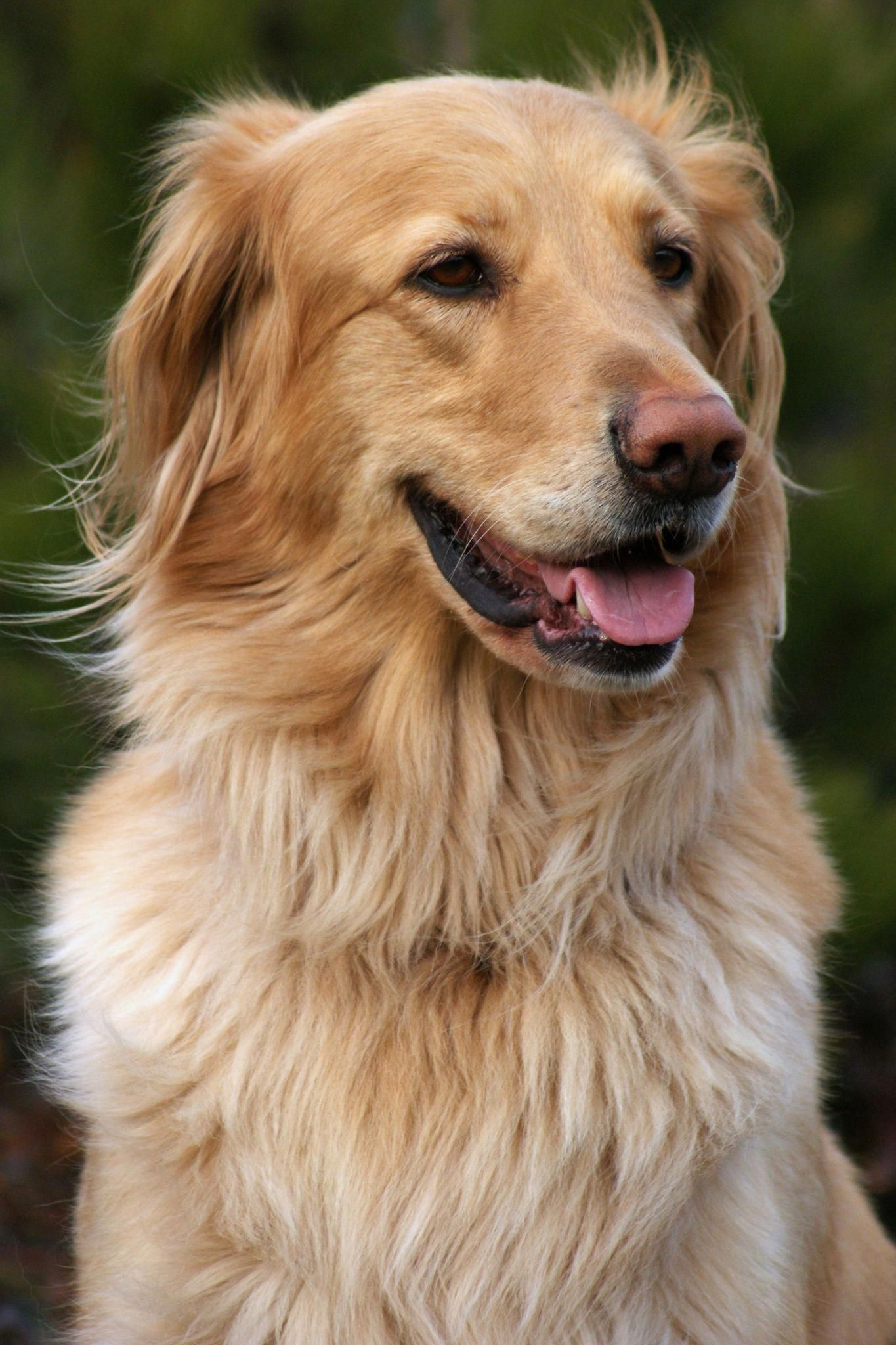 Train Your Pet Dogtraininglondon 1215678936 Dogtrickstrainingteaching Dog Training Dog Potty Training Dogs