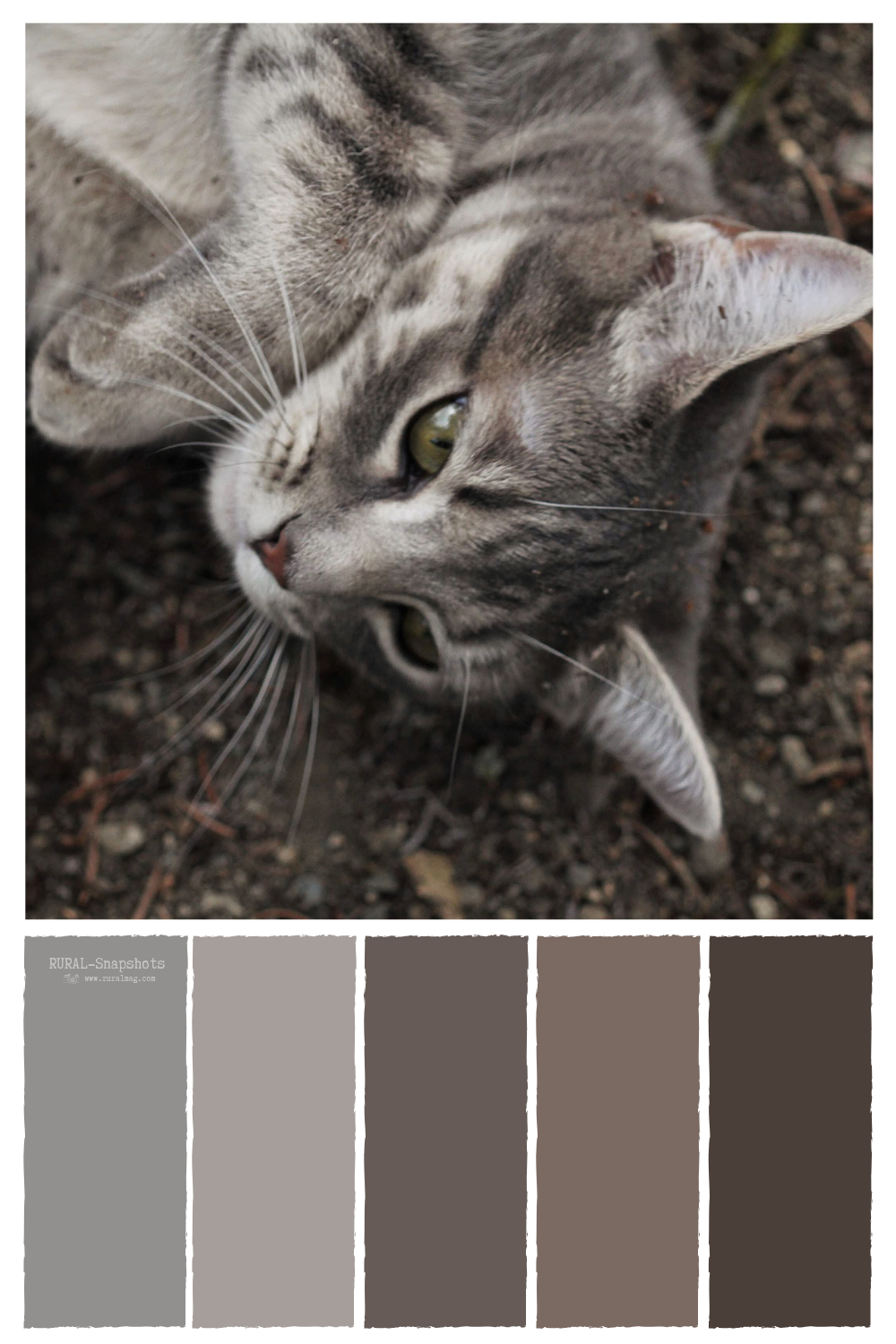 Grey Tabby Cat Laying In The Garden With A Soft Cocoa Colored