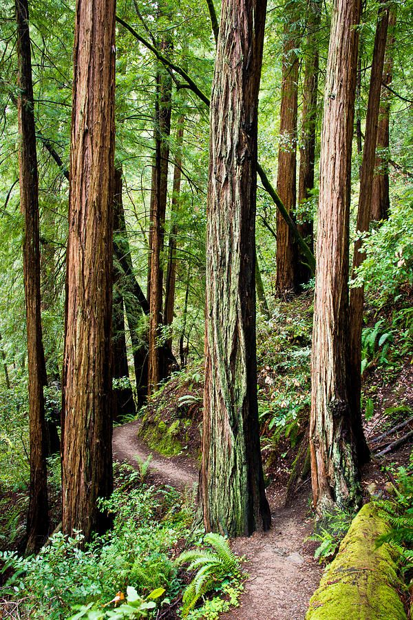 """""""Going to the woods is going home."""" -John Muir (pictured, Muir Woods) 