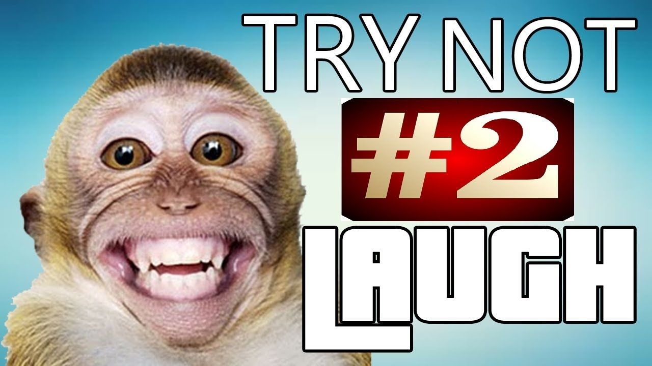 Funny animals are best try not to laugh challenge Funny