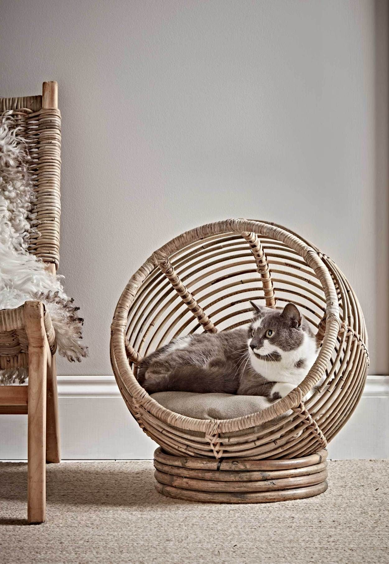 Six Places To Buy Stylish Pet Accessories These Four Walls Cat Bed Animal Room Pet Beds