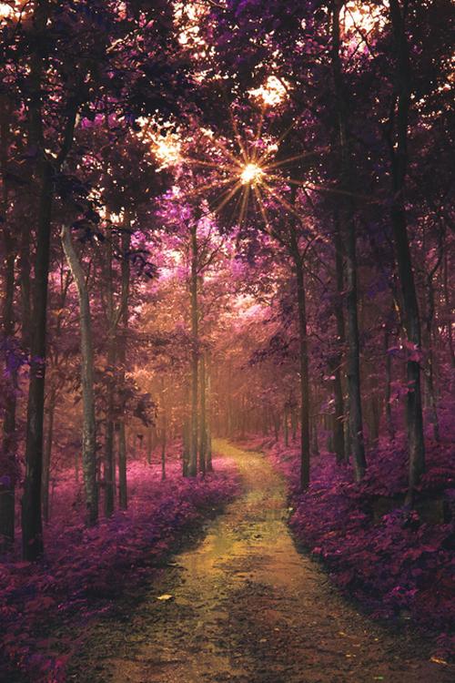 plasmatics:  The road to wonderland by Rakesh BS