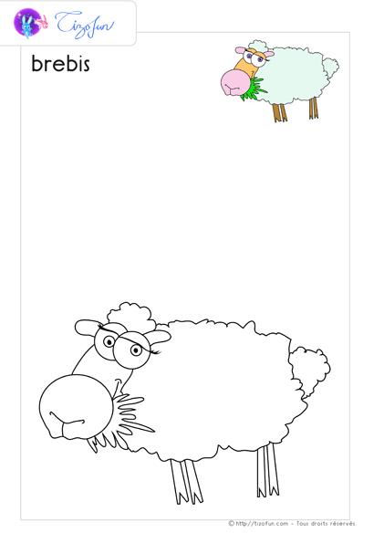 Animaux ferme dessin a colorier brebis coloriage - Brebis dessin ...